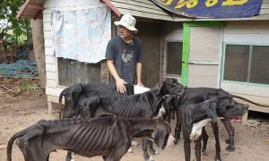 Король Таиланда взял под опеку 13 умирающих от голода догов