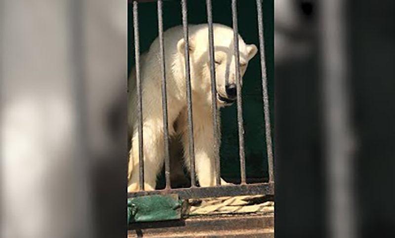 Ребенок разрыдался от жалкого вида животных в передвижном зоопарке