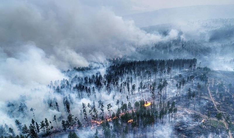 Россия обогнала Анголу, Зимбабве и Конго по масштабам лесных пожаров