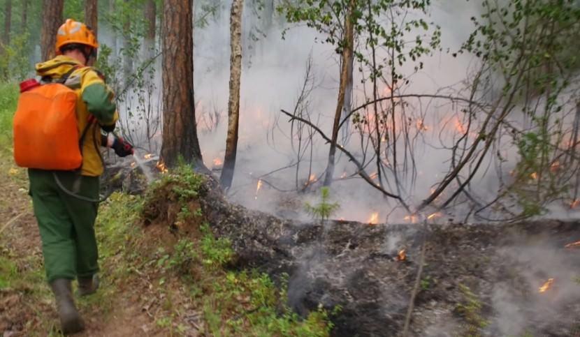 Генпрокуратура обвинила региональные власти в подтасовках данных по пожарам