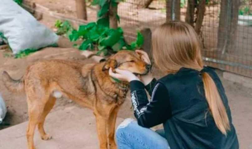 Школьница отдала отцовские алименты приюту для бездомных животных