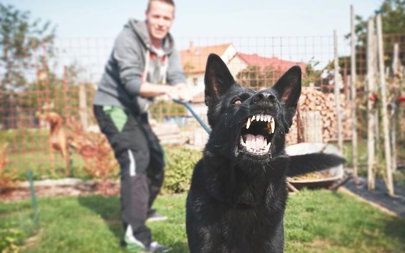 Нападение собаки на человека может обернуться уголовным делом для ее хозяина