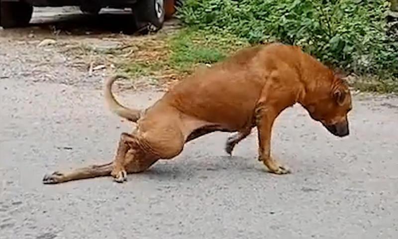 В Бангкоке собака придумала хитрый способ просить еду