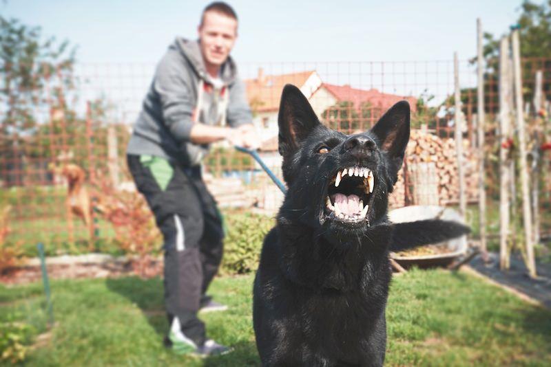 Россиянам решили запретить гулять с собаками в пьяном виде