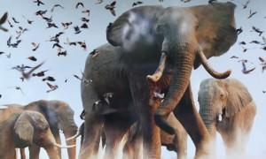 Календарь: 22 сентября - Всемирный день защиты слонов