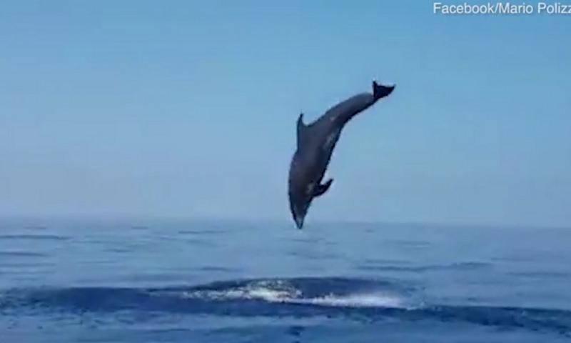 В Италии самка дельфина отблагодарила рыбаков, спасших ее детеныша