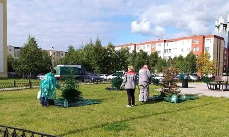 В Когалыме к приезду министра спорта РФ покрасили елки и траву в зеленый цвет