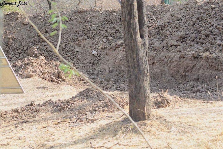 Идеальная маскировка: Сеть ищет спрятавшегося леопарда