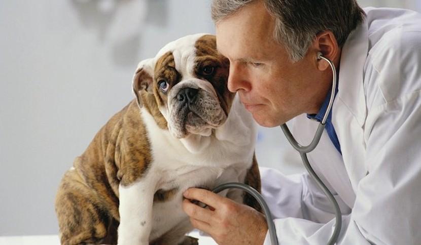 Ветеринар рассказал о последнем желании домашних животных перед смертью