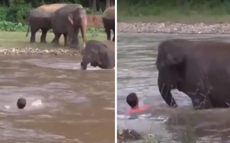 Чуткий слоненок бросился спасать человека и умилил сети
