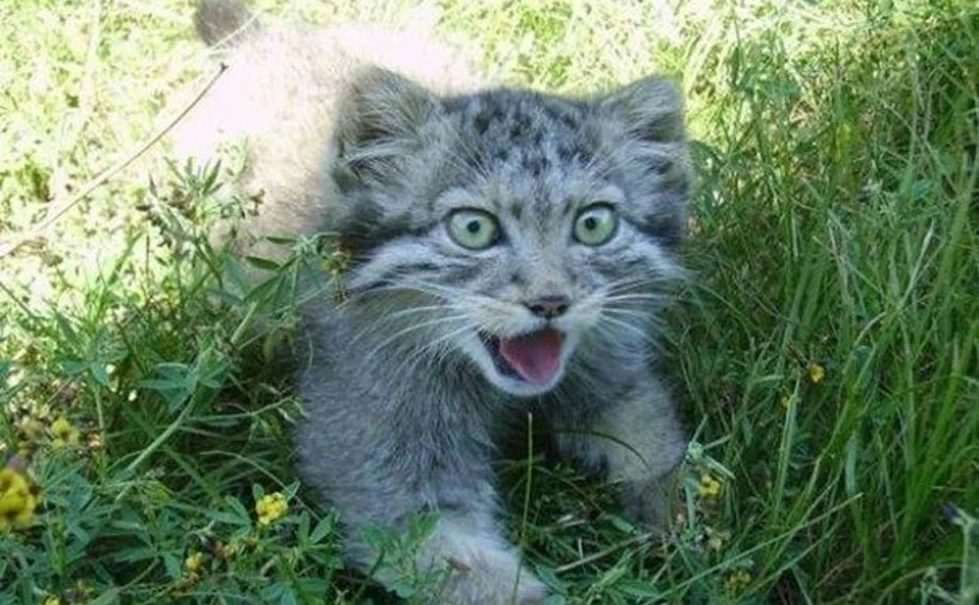 Русскому фермеру подкинули котят, но, когда они выросли, оказалось, что это совсем не коты