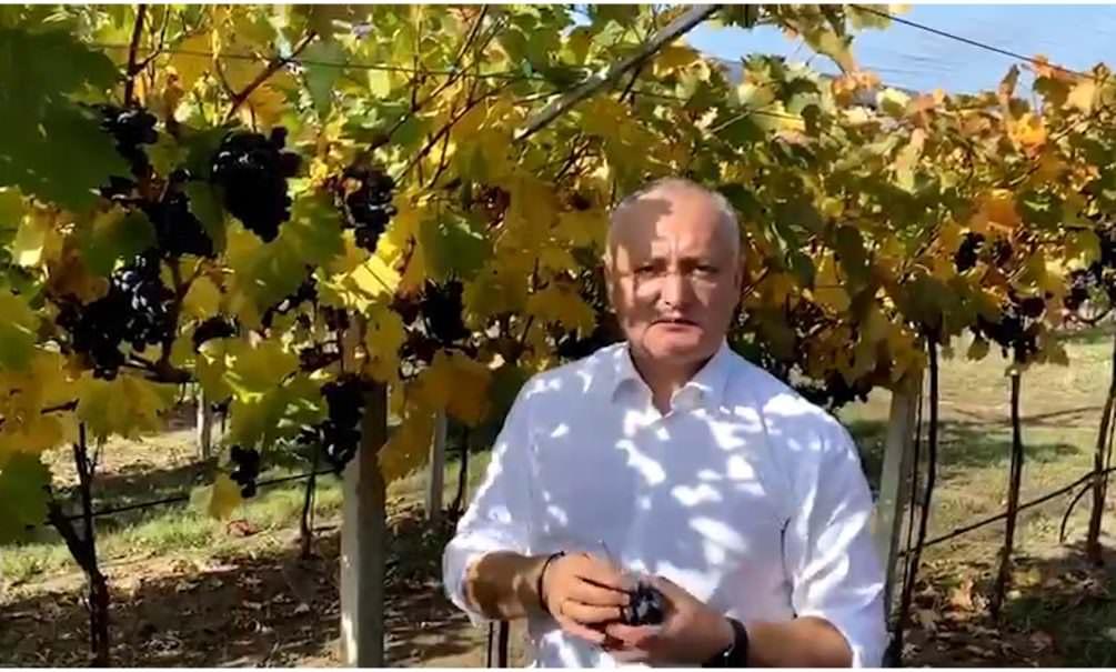 Президент Молдавии по-русски обратился к россиянам с просьбой покупать молдавский виноград
