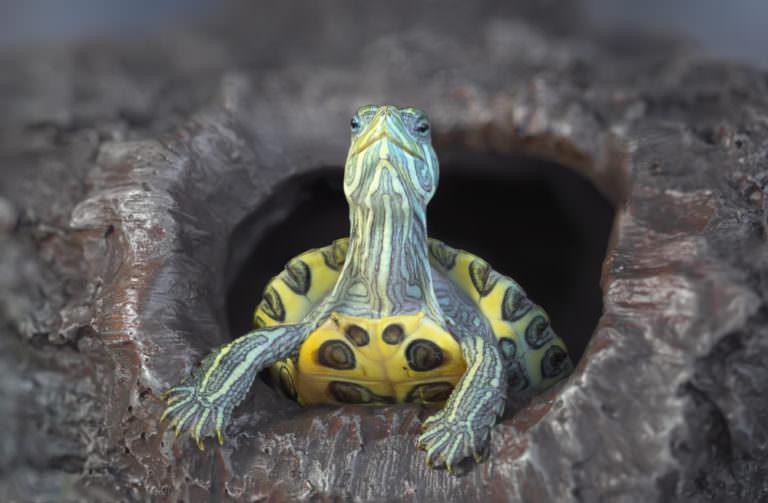 В оренбургском гараже жили тысячи черепах