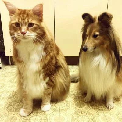 Мужчина подобрал на улице маленького котёнка, а он вырос размером с большую собаку