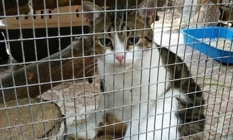 Тульский кот-наркокурьер сбежал из-под