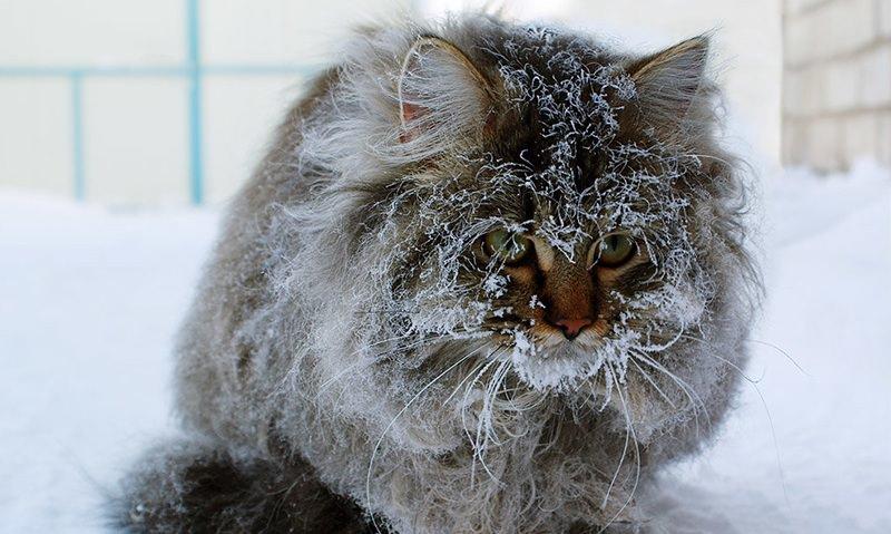 Российские подвалы откроют для кошек