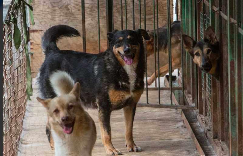 Кодекс об административных правонарушениях дополнят пунктами о жестоком обращении с животными