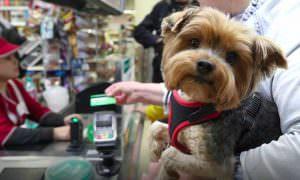 Россияне смогут обналичить деньги на кассах тысяч магазинов
