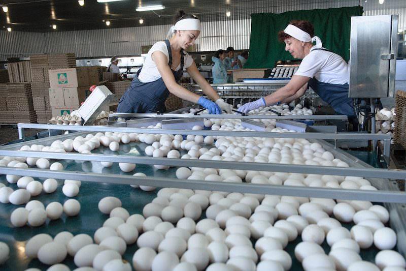 В России появились яйца с дополненной реальностью