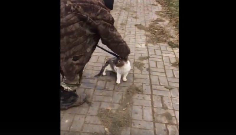 В Астрахани спасли кота, примерзшего к тонкому льду канала на набережной