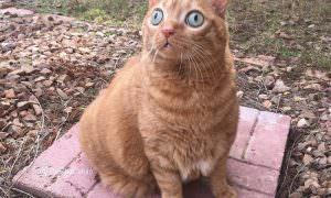 Из-за огроменных глаз кот стал звездой