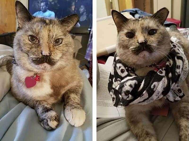 """Кошка получила странное имя из-за """"усов"""", которых нет - Блокнот Россия"""