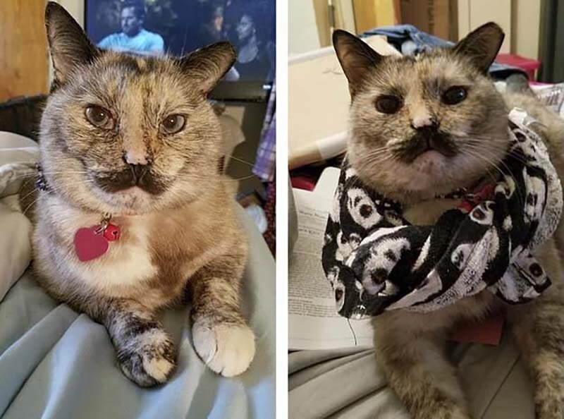 Кошка получила странное имя из-за