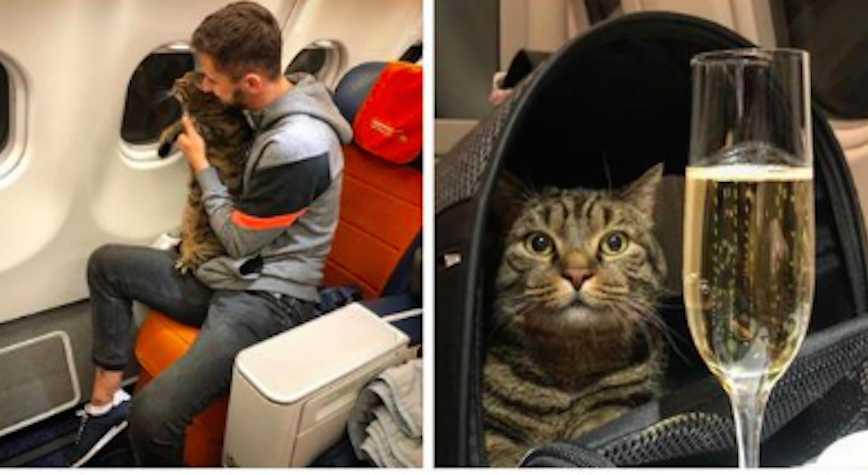 Слишком толстого кота не пустили в самолёт, и он полетел бизнес-классом