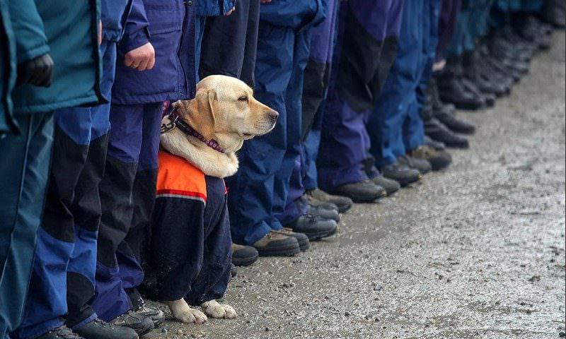 В России создадут приют для собак-ветеранов МЧС
