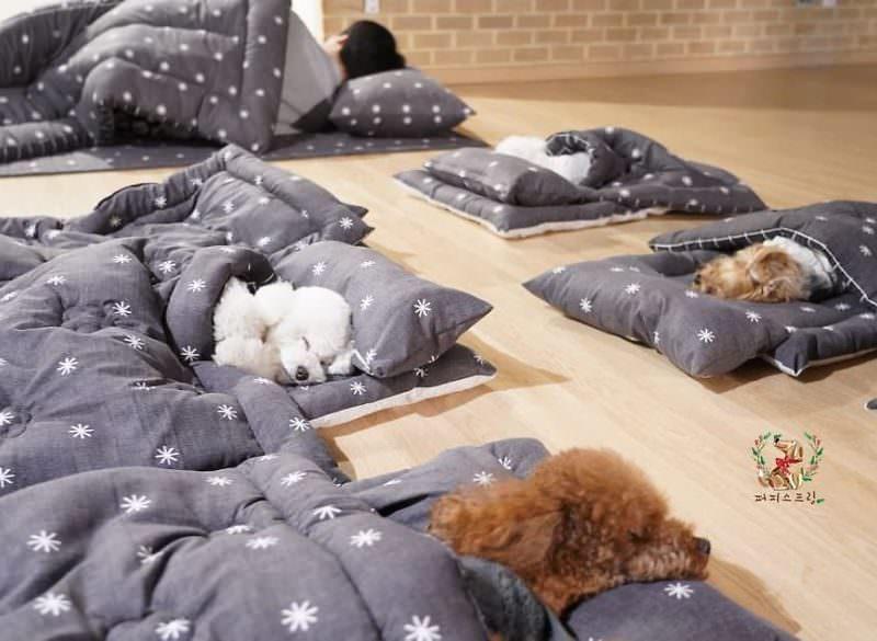 Спящие в детском саду щенята умилили соцсети