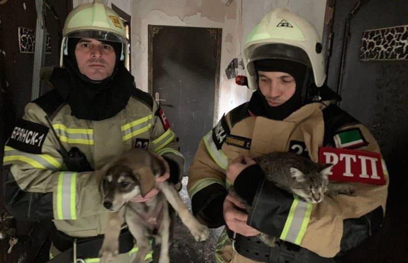 Пожарные в Чечне спасли 170 кошек и собак из горящего приюта