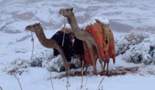 Верблюды в шоке: снег окутал Саудовскую Аравию