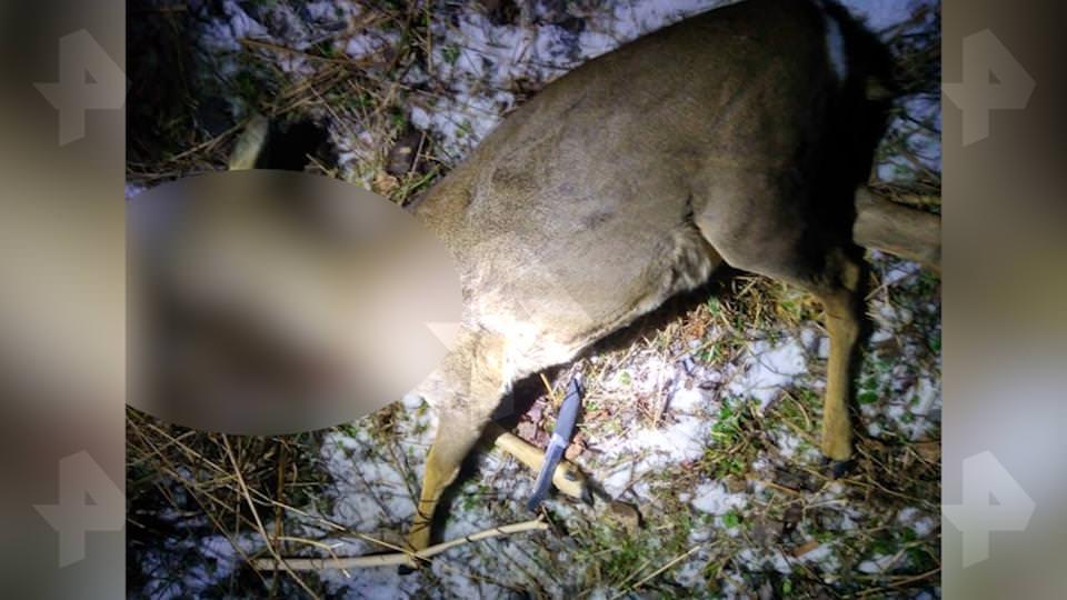 За убийство косули: по обвинению в браконьерстве задержаны постпред Свердловской области с коллегой