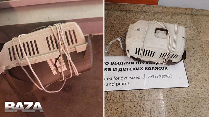 Два кота погибли на борту самолёта «Аэрофлота»