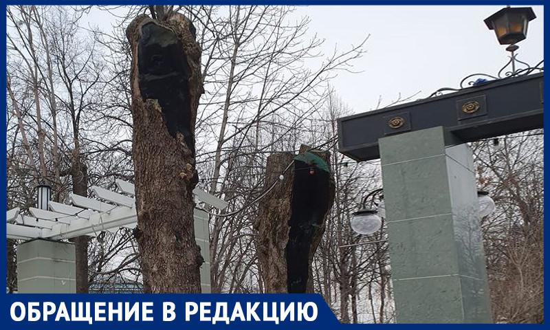 Деревья уничтожают в центре Москвы, где и так нечем дышать, пожаловались горожане
