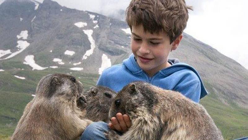 В Австрии подросток подружился с дикими сурками