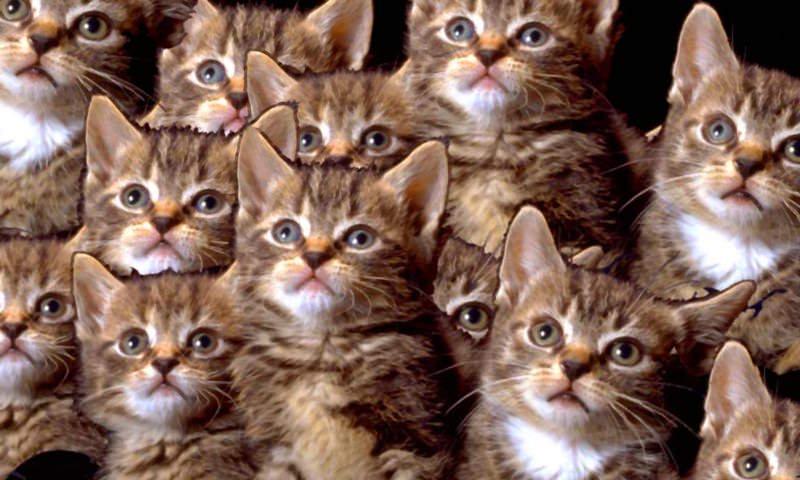 Пьющая москвичка развела в своей квартире 130 кошек