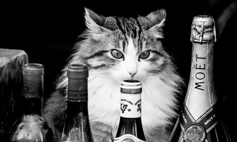 """""""Хватит бухать!"""": Кот устроил антиалкогольный разнос магазина"""