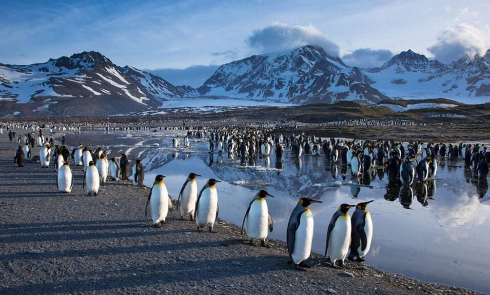 Коронавирус проник на все континенты, кроме Антарктиды