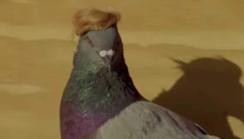 Над Лас-Вегасом пролетела стая голубей в кепочках и с прической Трампа