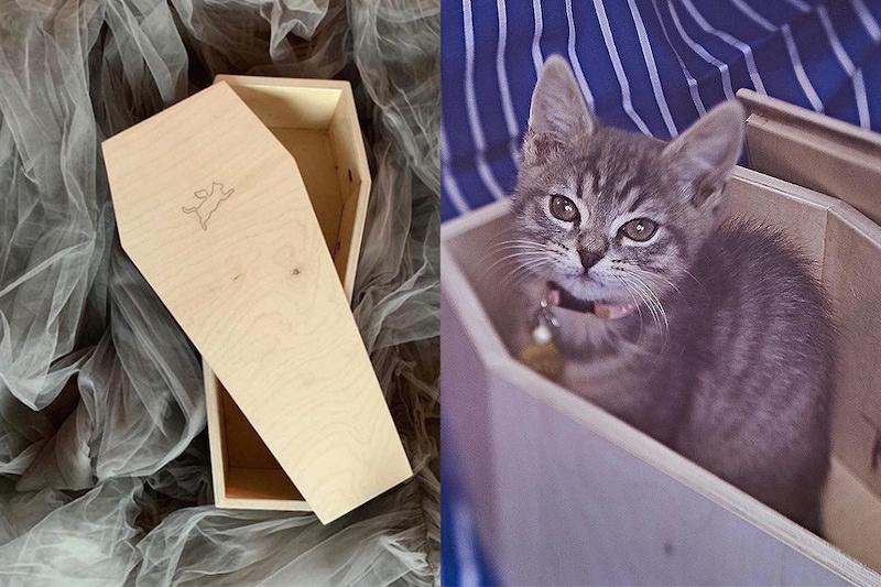 «Мосгоркошгроб»: в Москве организовали продажу гробов для котиков
