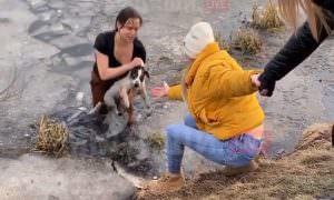 Многодетная россиянка нырнула в пруд, чтобы спасти собаку