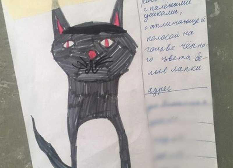 Трогательное объявление о пропаже котика умилило горожан