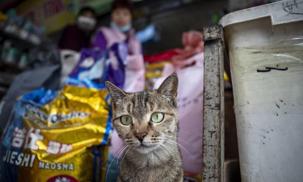 Кошки в китайском Ухане заражены коронавирусом