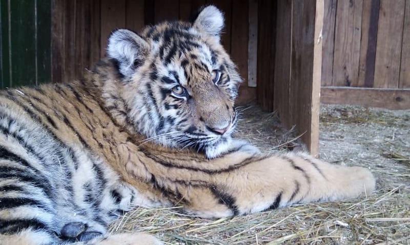 Звери мобильного зоопарка умирают от голода в плену карантина в Волгоградской области