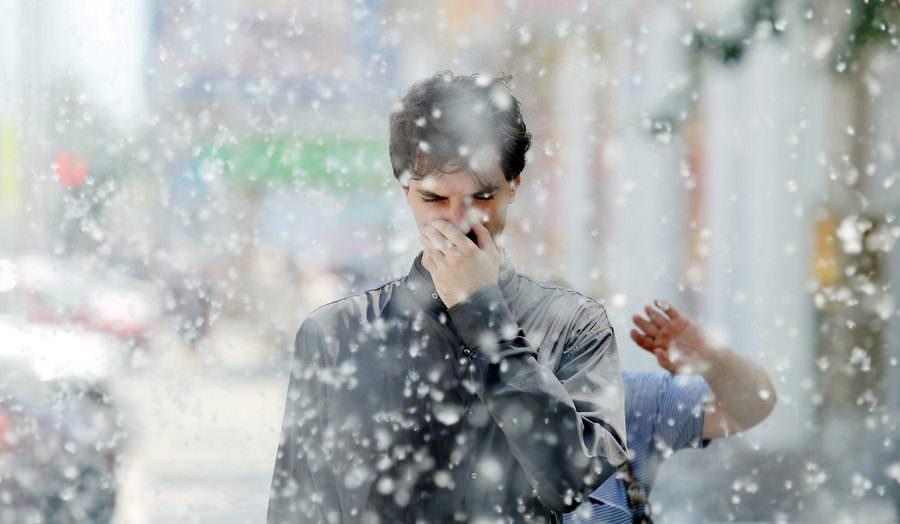 Пух тополей принесет россиянам коронавирус