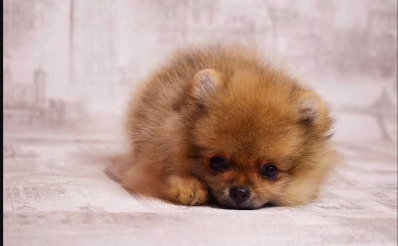 В России впервые посадили на карантин собаку, прилетевшую из-за границы