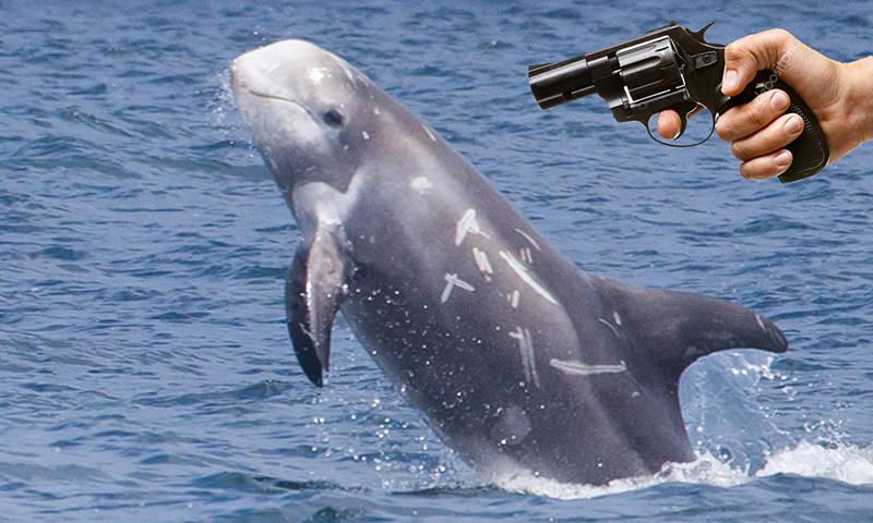 Феномен: дельфин, ставший личностью в отличие от некоторых людей