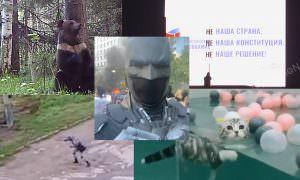 Самые интересные видео 2 июня