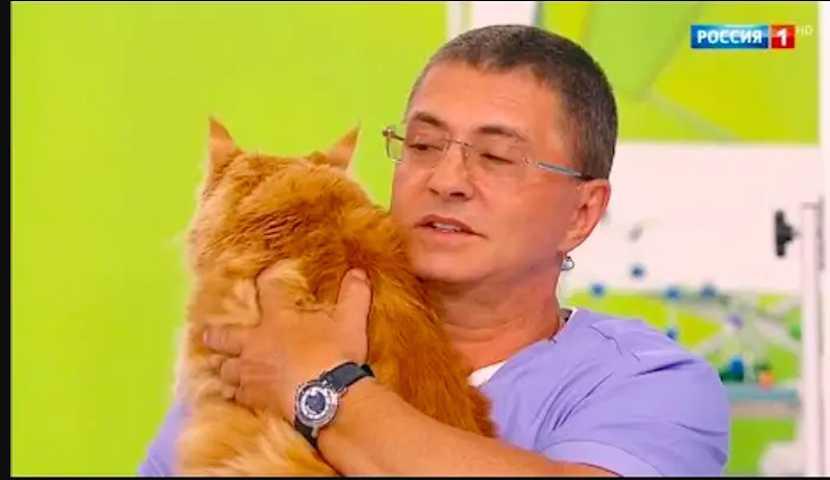 «Давайте хотя бы кошек и собак защитим»: доктор Мясников ответил Жириновскому об опасности питомцев